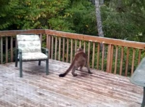 This young cougar was captured on film in July on the deck of Munsel Lake Road resident Bernie Cunningham.